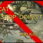 State of Survival : Sugar free guide for Gol Meow